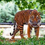 春のナイトZOO 天王寺動物園